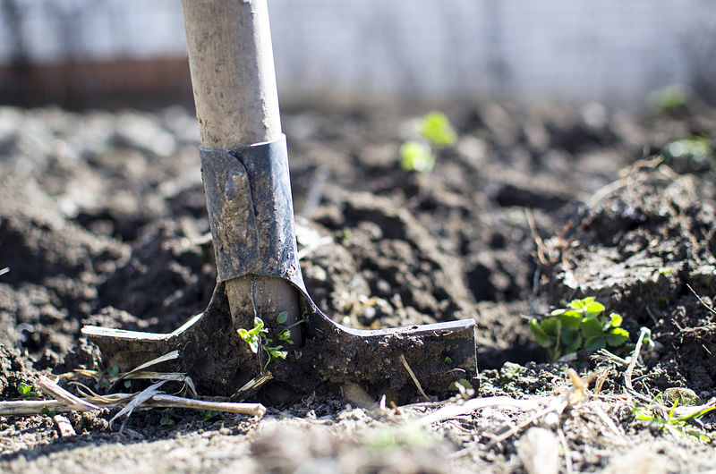 10 things every gardener needs